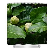 Noni Shower Curtain