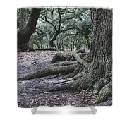 Norfolk Trees Shower Curtain
