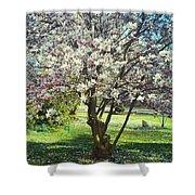 North American Magnolia Tree Shower Curtain