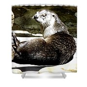 North American River Otter Shower Curtain