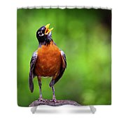 North American Robin In Song Shower Curtain