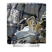 North Atlantic Gannets Shower Curtain