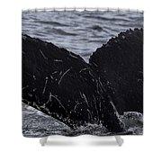 North Atlantic Humpback Shower Curtain