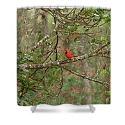 North Carolina Cardnial Shower Curtain