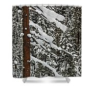 North Cascades Forest Shower Curtain