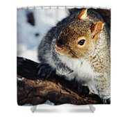 North Pond Squirrel Shower Curtain