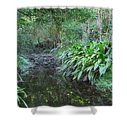 North Shore Forest Glade Shower Curtain