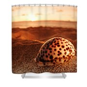 North Shore Seashell Shower Curtain
