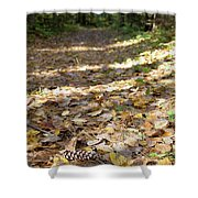 North Woods Path Shower Curtain