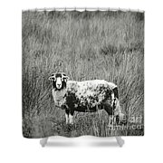 North Yorkshire Moors Sheep Shower Curtain