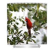 Northern Cardinal - In The Wind Shower Curtain