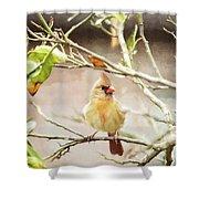 Northern Cardinal Female - Digital Painting Shower Curtain