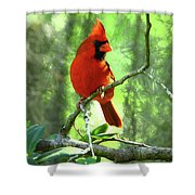 Northern Cardinal Proud Bird Shower Curtain