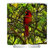 Northern Cardinal Work Number Two Shower Curtain