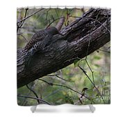 Northern Flicker  Shower Curtain