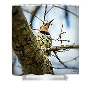 Northern Flicker - Woodpecker Shower Curtain