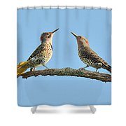 Northern Flickers Communicate Shower Curtain