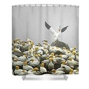 Northern Gannet Shower Curtain