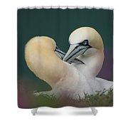 Northern Gannets Shower Curtain