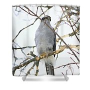 Northern Goshawk Shower Curtain