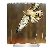 Northern Harrier Banking Shower Curtain