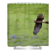 Northern Harrier Fly By Shower Curtain