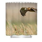 Northern Harrier Hawk Skimming The Fields Shower Curtain