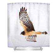 Northern Harrier  Shower Curtain