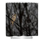 Northern Hawk-owl 22 Shower Curtain