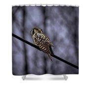 Northern Hawk-owl 6 Shower Curtain