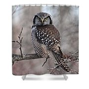 Northern Hawk Owl 9470 Shower Curtain
