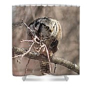 Northern Hawk Owl Having Lunch 9450 Shower Curtain