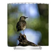Northern Mockingbird At Quarry Lake Shower Curtain
