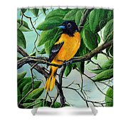 Northern Oriole Shower Curtain