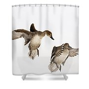 Northern Pintail Anas Acuta Duck Shower Curtain