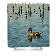 Northern Pintail At The Wetlands Shower Curtain