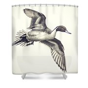 Northern-pintail Shower Curtain