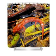 Northern Red Brook Shower Curtain