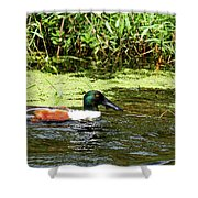 Northern Shoveler Drake Shower Curtain