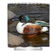 Northern Shoveler Duck Drake Shower Curtain