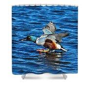Northern Shoveler Duck Landing Shower Curtain