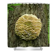 Northern Tooth Fungus Shower Curtain