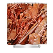 Norway, Bergen, Fish And Crustaceans Shower Curtain