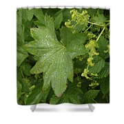 Norway, Hidra, Water Droplets Shower Curtain