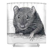 Norway Rat Shower Curtain