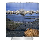 Norway Sheep Wool Getting Rolled Shower Curtain