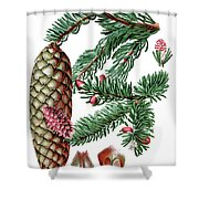 Norway Spruce, Pinus Abies Shower Curtain