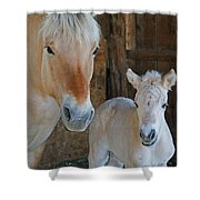 Norwegian Fjord Horse And Colt 1 Shower Curtain