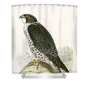 Norwegian Jer Falcon Shower Curtain