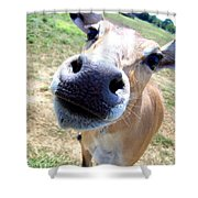 Nosey Cow Shower Curtain